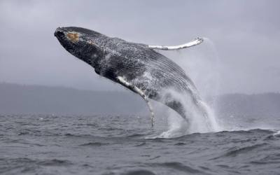 Book now for an incredible Whale watching tour!!